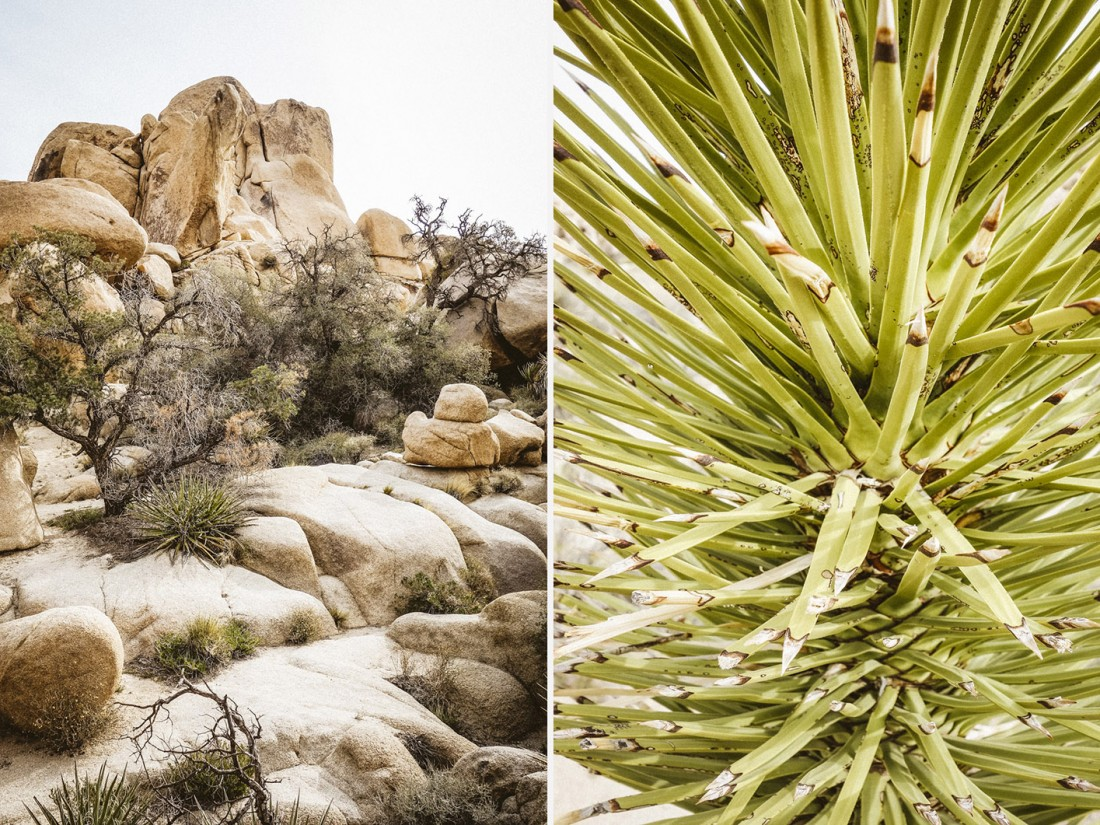 outdoor-story-joshua-tree-04