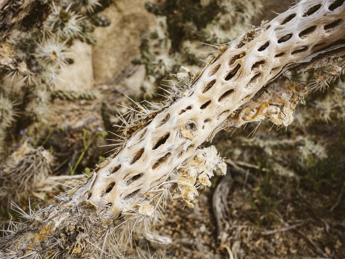 outdoor-story-joshua-tree-05