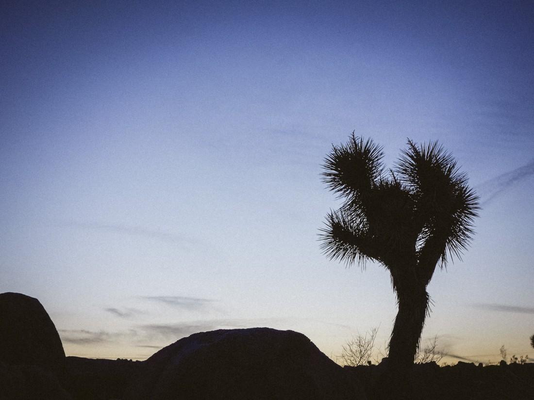 outdoor-story-joshua-tree-11