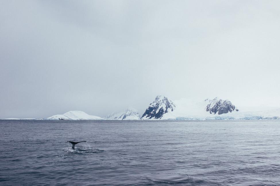 Poler Stuff Adventure #114 Antartica