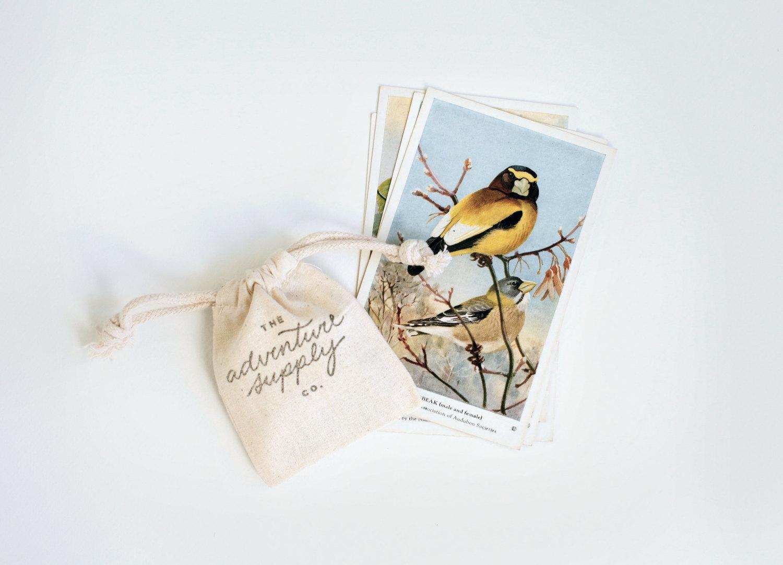 Adventure Supply Co. Vintage Birds Postcards